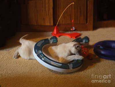 Kitty At Play Original