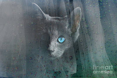 Kitty At The Window Art Print