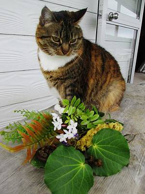 Photograph - Kitty Bouquet by Dianne  Connolly
