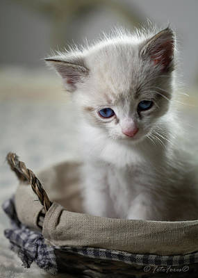 Photograph - Kitty Cat by Alexander Fedin