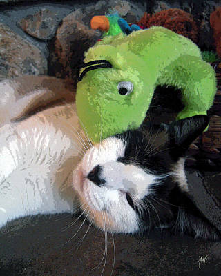 Photograph - Kitty Cat And Gecko by Michele Avanti