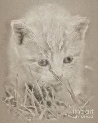 Animals Drawings - Kitty Cat by Esoterica Art Agency