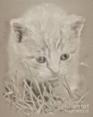 Kingfisher Drawing - Kitty Cat by John Springfield