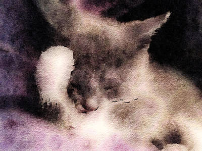Watercolor Pet Portraits Photograph - Kitty Cat Nap by Susan Maxwell Schmidt