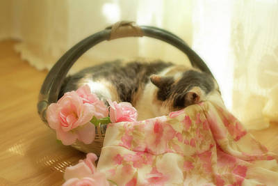 Photograph - Kitty Cat Sleeping In A Basket by Eleanor Caputo