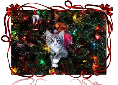 Photograph - Kitty Christmas Card by Corlyce Olivieri