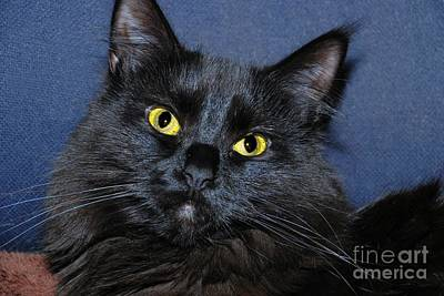 Photograph - Kitty by Debbie Stahre