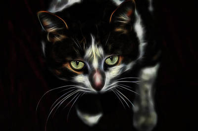 Photograph - Kitty Glow by Michelle McPhillips