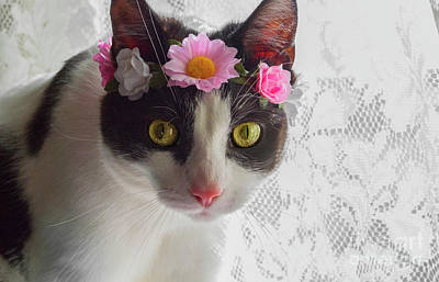 Photograph - Kitty In A Flower Crown 2 by Naomi Burgess