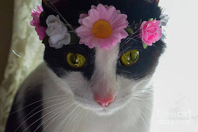 Photograph - Kitty In A Flower Crown 3 by Naomi Burgess