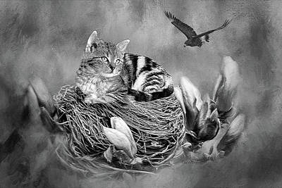 Photograph - Kitty In The Nest Painting - Black And White by Ericamaxine Price