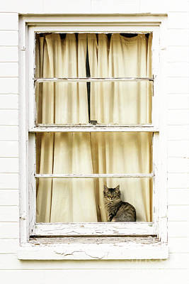 Photograph - Kitty In The Window by Paul Conrad