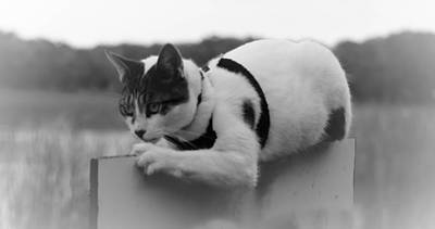 Photograph - Kitty On The Edge by Leticia Latocki