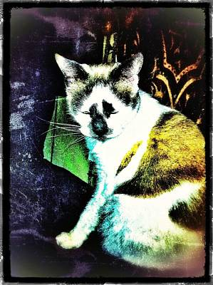 Photograph - Kitty Over The Shoulder by Eddie G