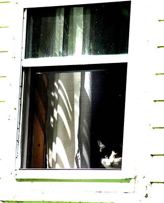 Photograph - Kitty Peek by Emily Stauring
