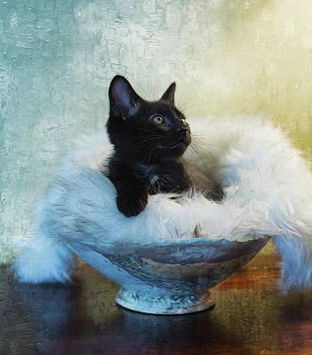 By Jackie Photograph - Kitty Portrait by Jackie Sajewski