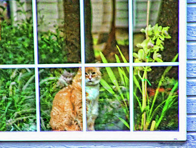 Photograph - Kitty Reflections by Wendy McKennon