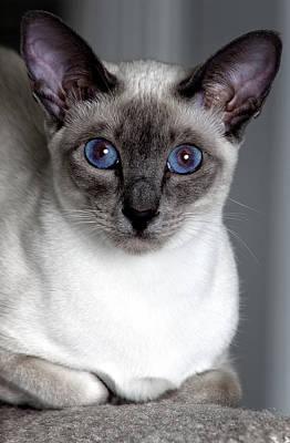 Photograph - Kitty Stares by Reynaldo Williams