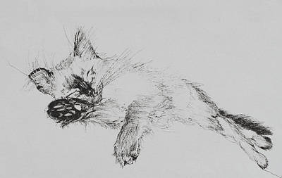 Catnap Drawing - Kitty by Vincent Alexander Booth