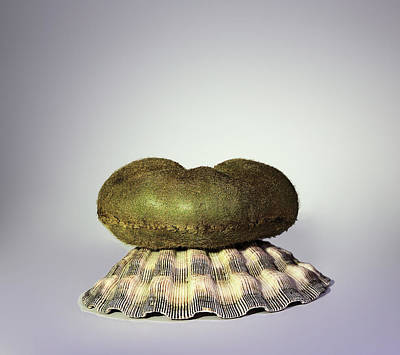 Photograph - Kiwi On Shell by Viktor Savchenko
