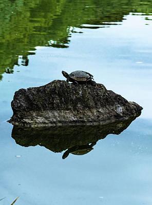 Photograph - Kiyosumi Garden And Turtle by Steven Richman