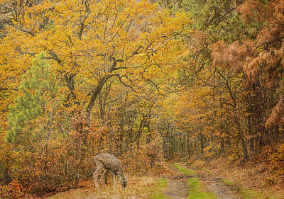 Photograph - Klickitat Autumn by Angie Vogel
