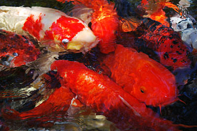 Photograph - Kluster Of Koi by Amanda Vouglas