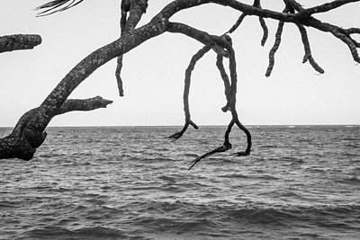 Photograph - Knarled Tree Limb by Carolyn Ricks