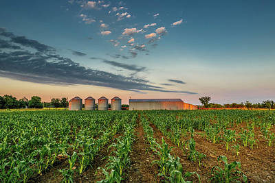 Photograph - Knee High Sweet Corn by Steven Sparks