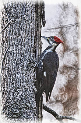 Pileated Woodpecker Photograph - Knock Knock by Lois Bryan