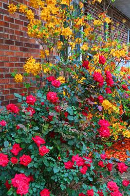 Photograph - Knockout Rose And Azaleas by Kathryn Meyer