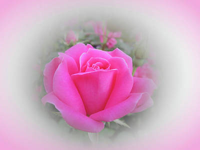Photograph - Knockout Rose Beauty - Pink Vignette by MTBobbins Photography