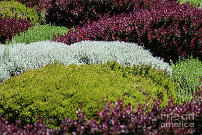 Photograph - Knot Garden by Suzanne Luft