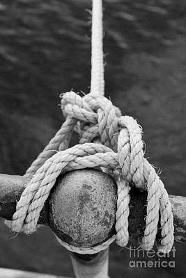 Photograph - Knot On My Warf Iv by Stephen Mitchell