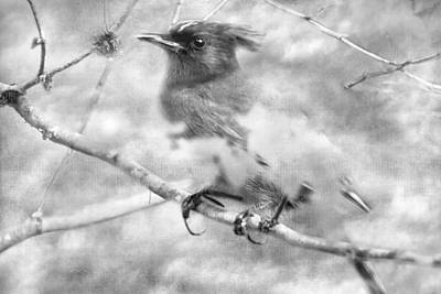 Photograph - Knowing It Has Wings Bw by Belinda Greb