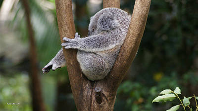 Koala Bear Digital Art - Koala Bear 3 by Gary Crockett