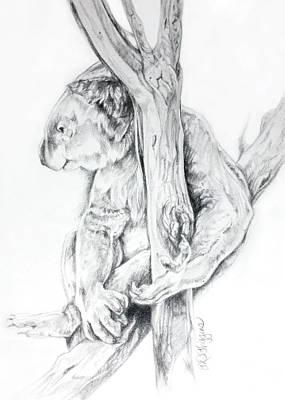 Koala Drawing - Koala Bear  by Derrick Higgins