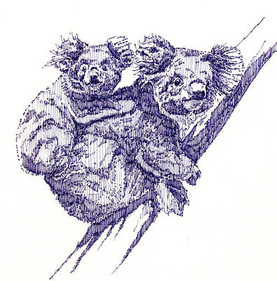 Koala Drawing - Koala Bears by John D Benson