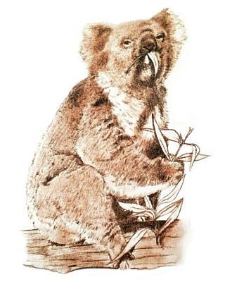Drawing - Koala by Murry Whiteman