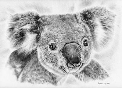 Animals Drawings - Koala Newport Bridge Gloria by Casey