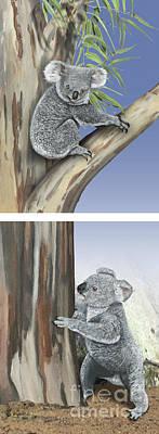 Animals Paintings - Koala Phascolarctos cinereus - Koala bear - chemical communicati by Urft Valley Art \ Matt J G  Maassen-Pohlen