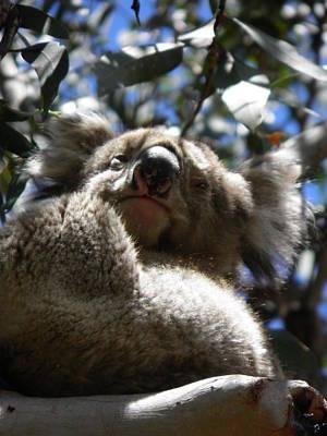 Koala Photograph - Koala Smile by Viktor Milenkov