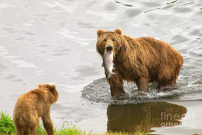 Photograph - Kodiak Lunch Break by Moore Northwest Images