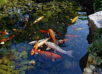 Koi - Dsc00016 Art Print by Shirley Heyn