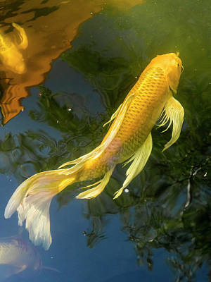 Photograph - Koi 2 by Mark Mille