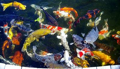 Photograph - Koi 7214 1 by Phyllis Spoor