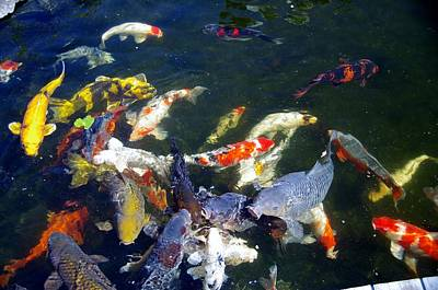 Photograph - Koi 7214 2 by Phyllis Spoor