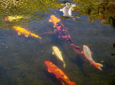 Photograph - Koi 7214 4 by Phyllis Spoor