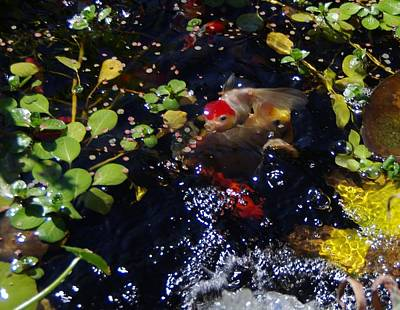 Photograph - Koi 7214 5 by Phyllis Spoor