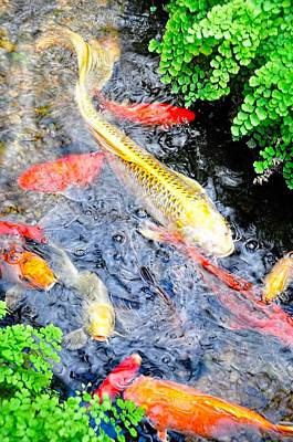 Photograph - Koi Along The Maidenhair Ferns by Jan Amiss Photography